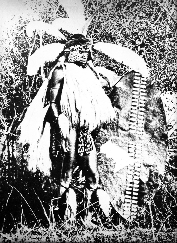 A Zulu Warrior in full regalia carrying a knobkerrie and the large isihlangu shield.