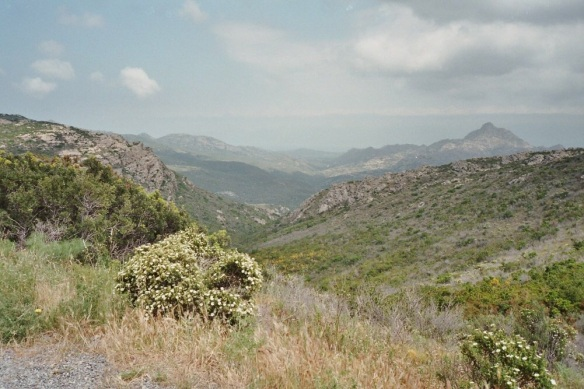 Where the forest gives out, the Macchia scrub pervades. Corsica. Wikipedia.